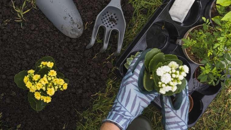 Manutenção do jardim: porquê você deve fazer uma?